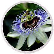 Blue Crown Passion Flower Round Beach Towel by Debbie Oppermann