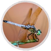 Blue Dasher Dragonfly Round Beach Towel by Betty LaRue