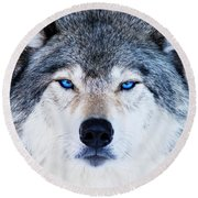 Round Beach Towel featuring the photograph Blue Eyed Wolf Portrait by Mircea Costina Photography