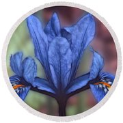 Blue Flag Iris Round Beach Towel