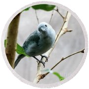 Blue-grey Tanager Round Beach Towel