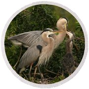 Round Beach Towel featuring the photograph Blue Heron Family by Shari Jardina