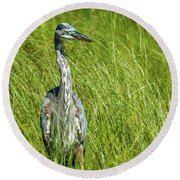 Round Beach Towel featuring the photograph Blue Heron In A Marsh by Paul Freidlund