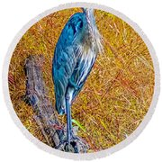 Round Beach Towel featuring the photograph Blue Heron In Maryland by Nick Zelinsky