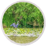 Round Beach Towel featuring the photograph Blue Heron Landing May 2016.  by Leif Sohlman
