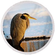 Round Beach Towel featuring the photograph Blue Heron Resting by Bryan Carter