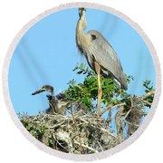 Round Beach Towel featuring the photograph Blue Heron Series Baby 2 by Deborah Benoit
