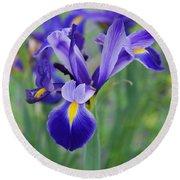 Blue Iris Flower Round Beach Towel