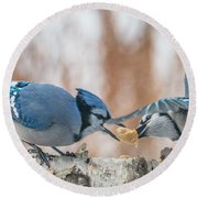 Blue Jay Battle Round Beach Towel by Patti Deters