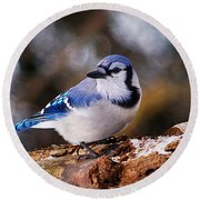 Blue Jay Day Round Beach Towel
