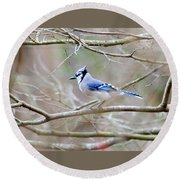 Round Beach Towel featuring the photograph Blue Jay by George Randy Bass