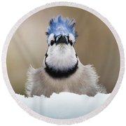 Blue Jay In Snow Round Beach Towel