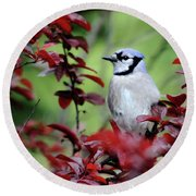 Blue Jay In The Plum Tree Round Beach Towel