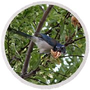 Blue Jay Round Beach Towel by Jennifer Muller