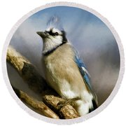 Blue Jay Round Beach Towel by Lana Trussell