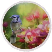 Blue Jay On A Blooming Tree Round Beach Towel