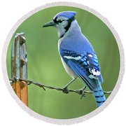 Blue Jay On The Fence Round Beach Towel