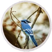 Blue Jay Round Beach Towel by Robert Frederick