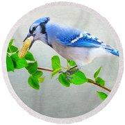 Blue Jay With Peanut Round Beach Towel