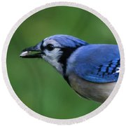 Blue Jay With Seed Round Beach Towel