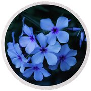 Round Beach Towel featuring the photograph Blue Moon Phlox by Cristina Stefan