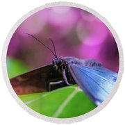 Blue Morpho  Butterfly 2 Round Beach Towel