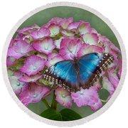 Blue Morpho Butterfly On Pink Hydrangea Round Beach Towel