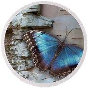 Blue Morpho Butterfly On White Birch Bark Round Beach Towel