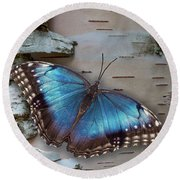 Blue Morpho Butterfly On White Birch Bark Round Beach Towel