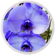 Blue Phalaenopsis Orchid Round Beach Towel