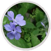 Blue Phlox Round Beach Towel