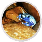 Round Beach Towel featuring the photograph Blue Poison Dart Frog by Anthony Jones