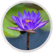 Blue Purple And Orange Water Lily Round Beach Towel