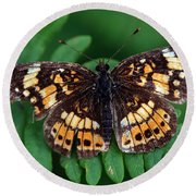 Round Beach Towel featuring the photograph Blue Ridge Butterfly by Kay Lovingood