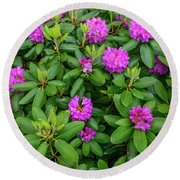 Blue Ridge Mountains Rhododendron Blooming Round Beach Towel