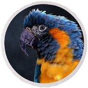 Blue-throated Macaw Profile Round Beach Towel