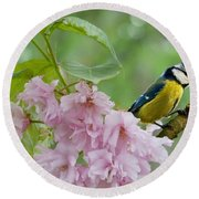 Blue Tit On Cherry Blossom Round Beach Towel