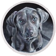 Blue Weimaraner Round Beach Towel