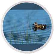 Round Beach Towel featuring the photograph Blue Winged Teal by Ann E Robson