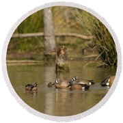 Blue-winged Teal Round Beach Towel