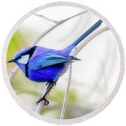 Blue Wren, Margaret River Round Beach Towel
