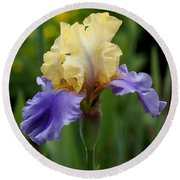 Blue Yellow Iris Germanica Round Beach Towel by Rona Black