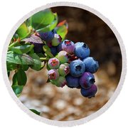 Blueberries Out On A Limb Round Beach Towel