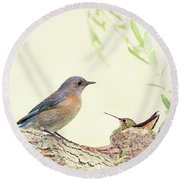 Bluebird And Baby Hummer Round Beach Towel