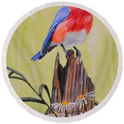 Bluebird And Daisies Round Beach Towel