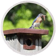 Bluebird Breakfast Feeding Round Beach Towel