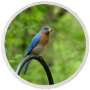 Bluebird Catches Worm Round Beach Towel