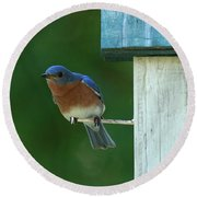 Bluebird Round Beach Towel by Douglas Stucky