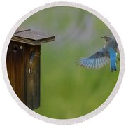 Bluebird Feeding Time Round Beach Towel