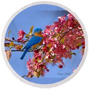 Bluebird In Apple Blossoms Round Beach Towel